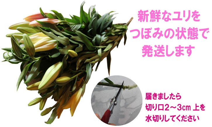 yuri_5