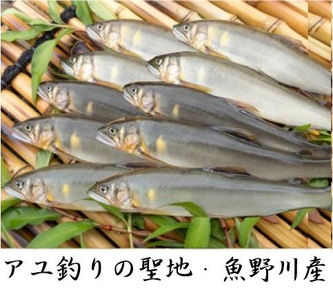 あゆ10匹2 (2)